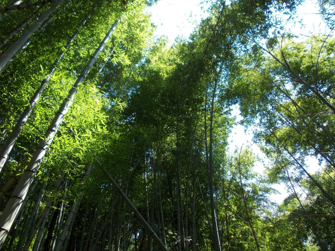 Mount Kunō – Bamboo forest