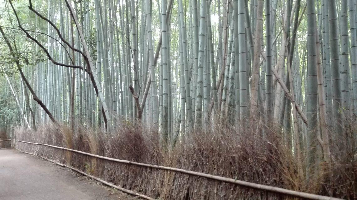 Kyōto – Arashiyama